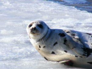 Charlos Cove Seal