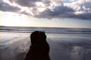 SeaWind Landing - Torbay dreaming
